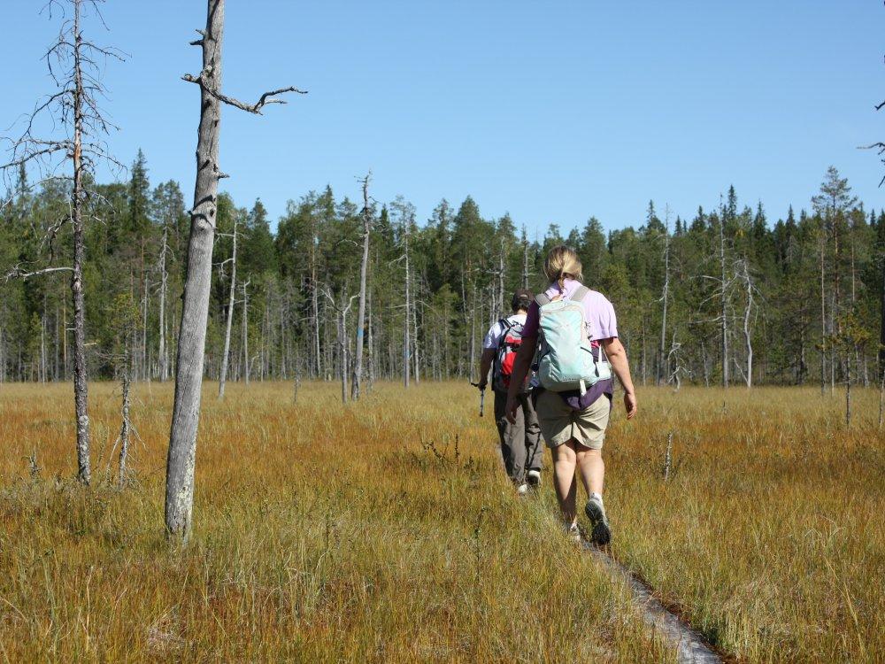 Wanderung im Nordosten Finnland