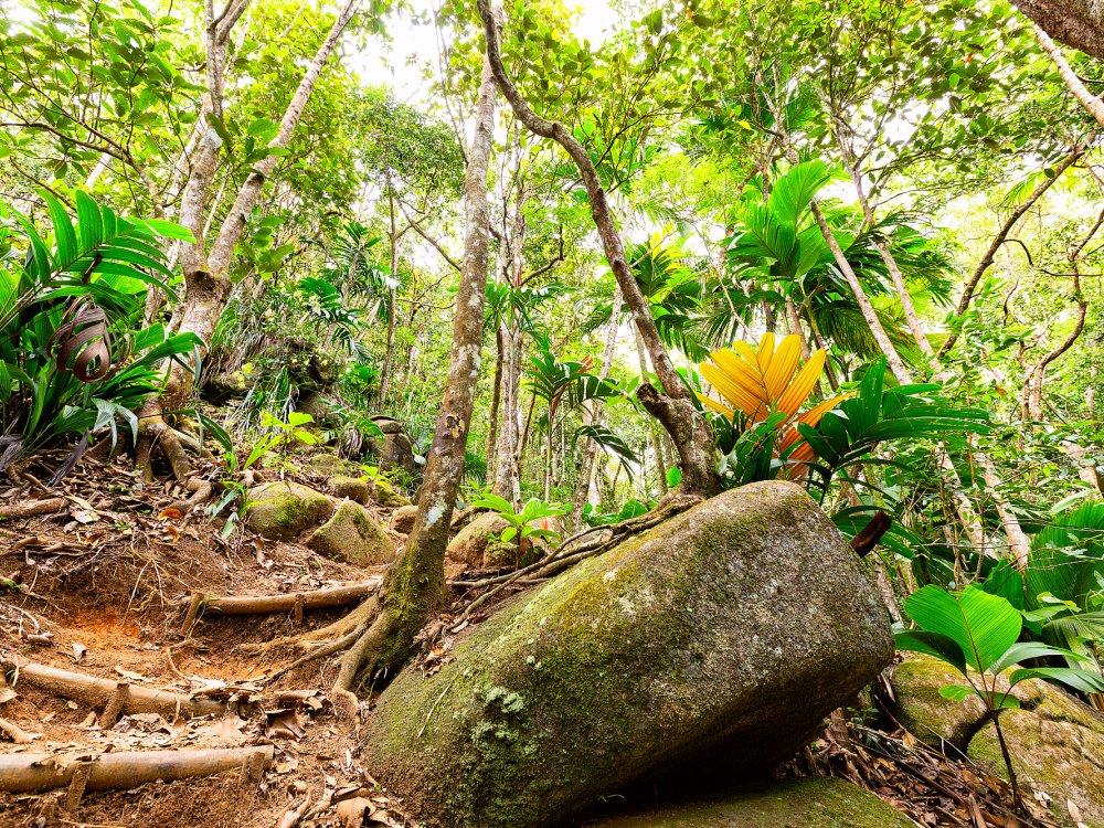 Tropischer Regenwald und Dschungel auf den Seychellen