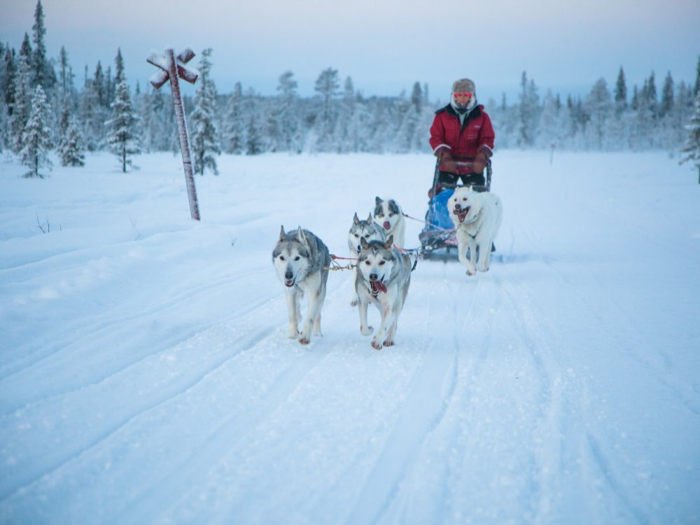 Husky Tour in Lappland