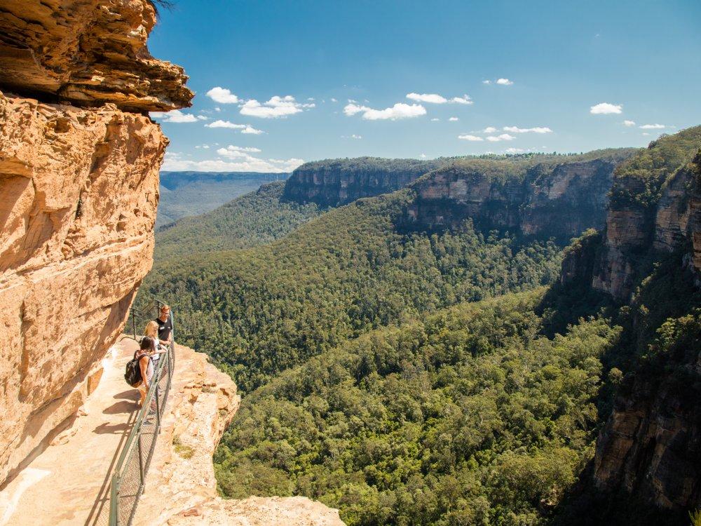 Stray Australia_10