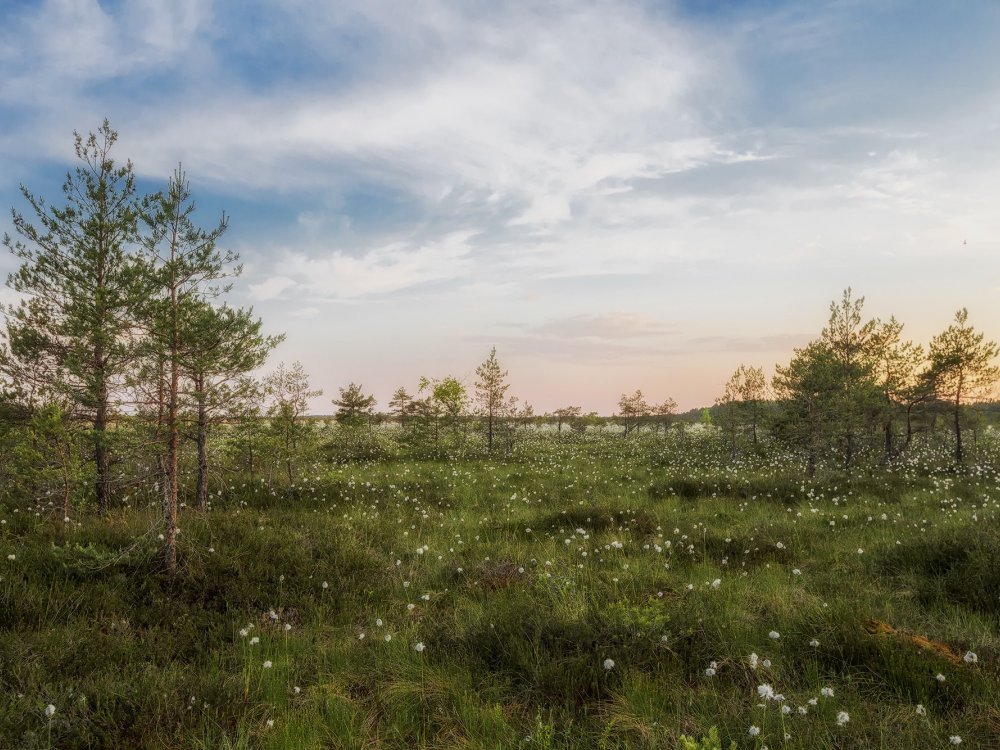 Landschaft in Estland
