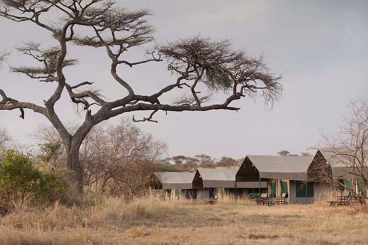 Halisi Camp Serengeti