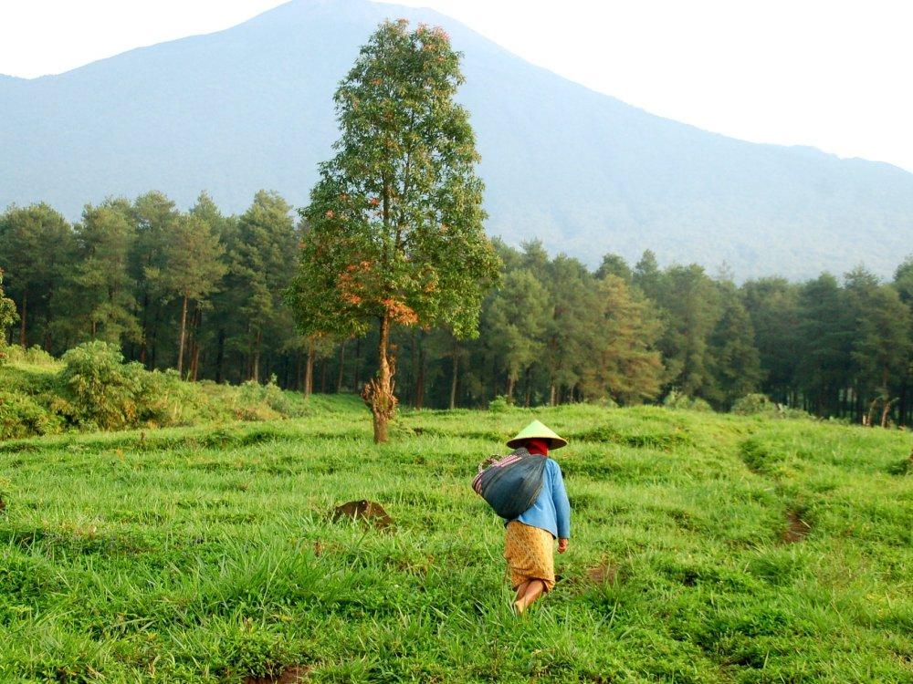 Landliches Java auf einer Farm bei Yogyakarta