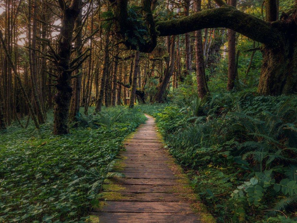 Wooden pathway near Tofino