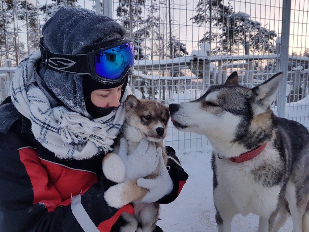 Huskies schmusen