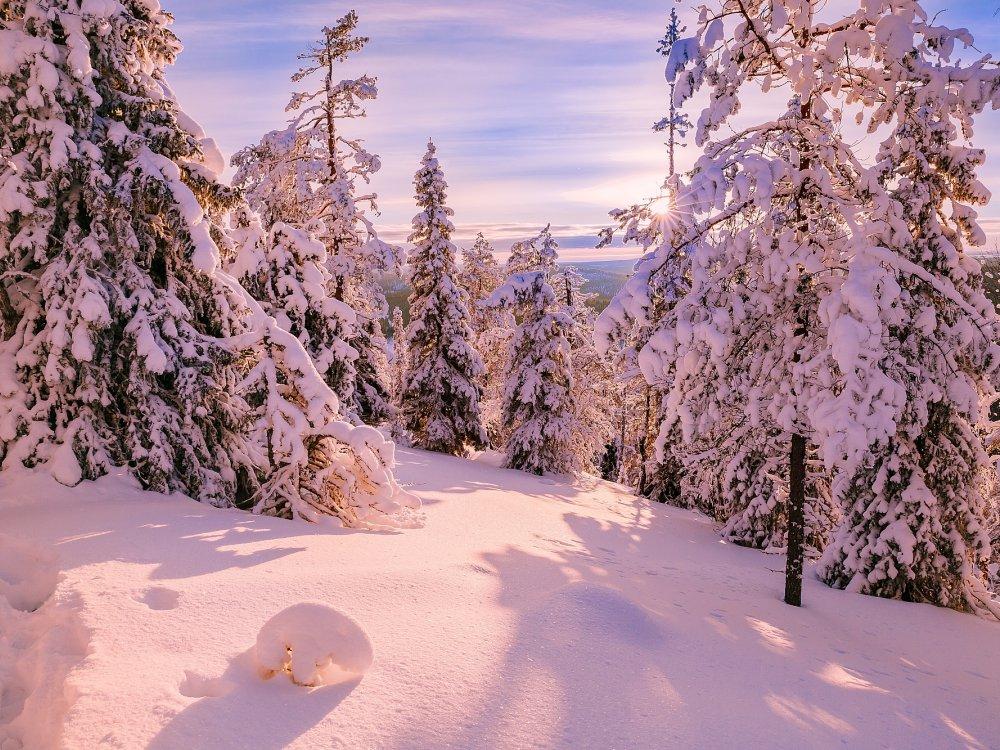 Sonnige Winterlandschaft mit tief verscheiten Bäumen