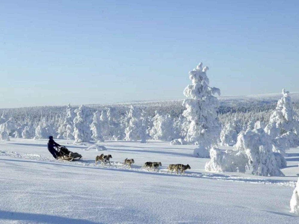 Husky Wintertraum
