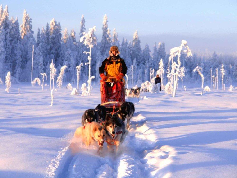 Mit dem Huskygespann ins Wintermärchen