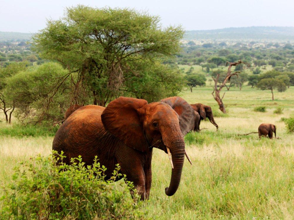 Elefantenherde auf Safari im Tarangire Nationalpark