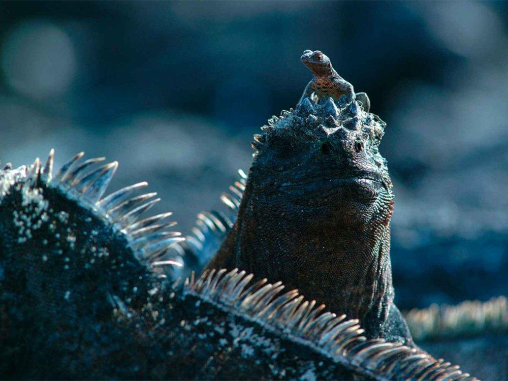 Einzigartige Tierwelt auf Galapagos