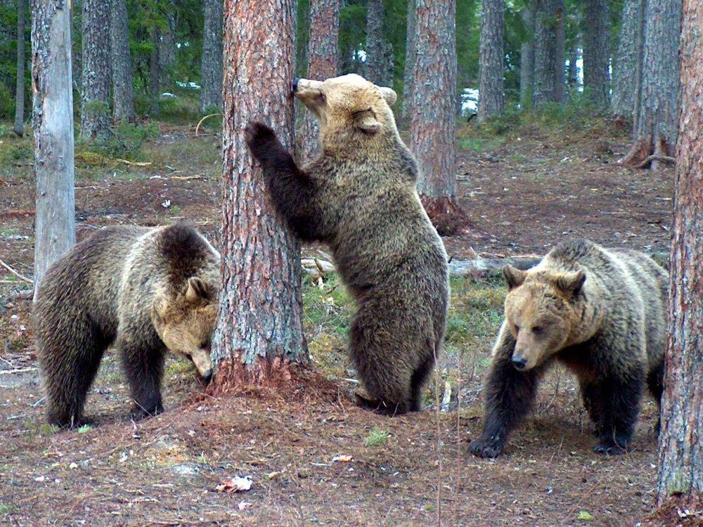 146F10004 Finnlands Norden - Natur & Wildlife Karte