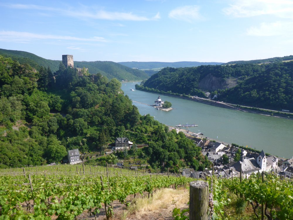 Rheinsteig Rheinblick Weinberge und Burg Gutenfels Pfalzgrafenstein