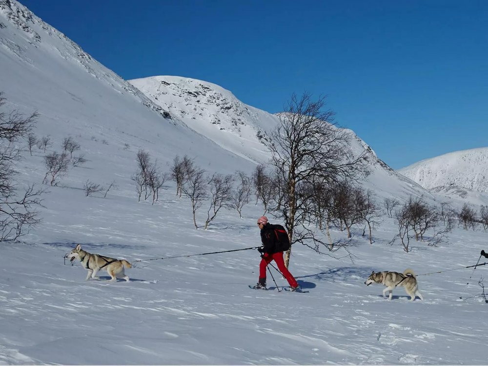 Husky Trekking Schweden