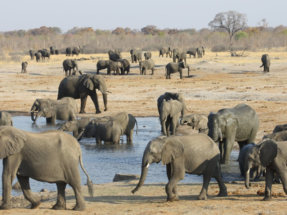 Elefanten an einer Wasserstelle im Hwange Nationalpark