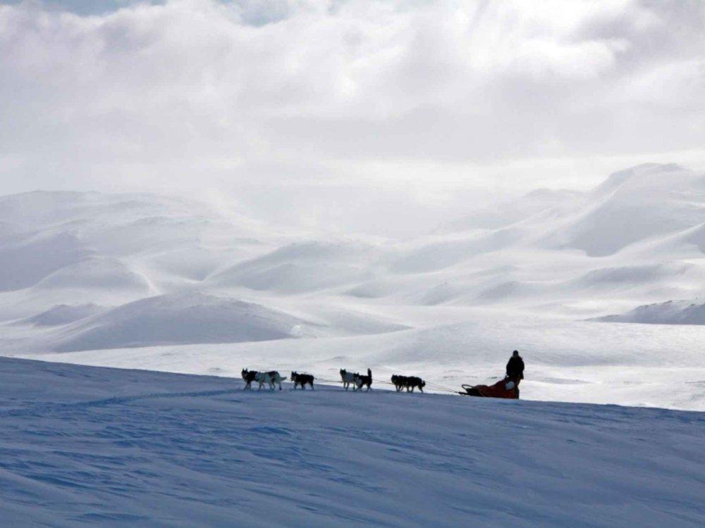 Huskytour durch Nordschweden