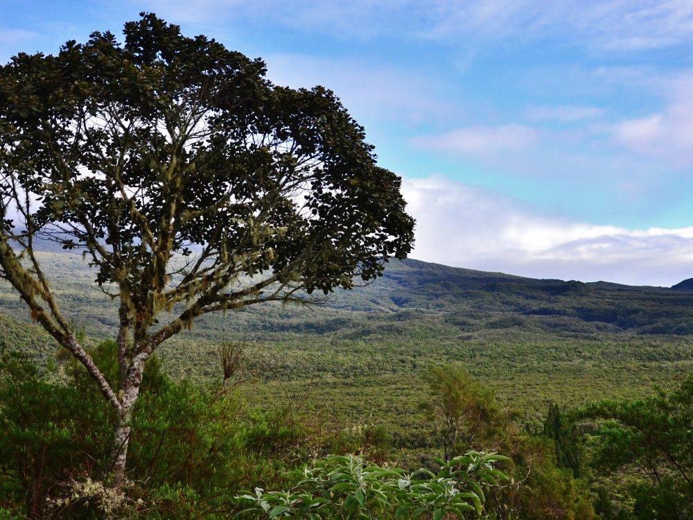 Réunion - Wald Bebour