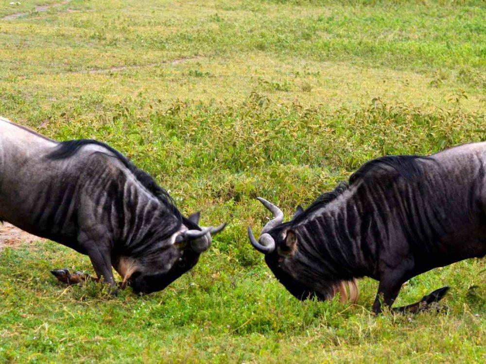 Ostafrika Overland-Safari