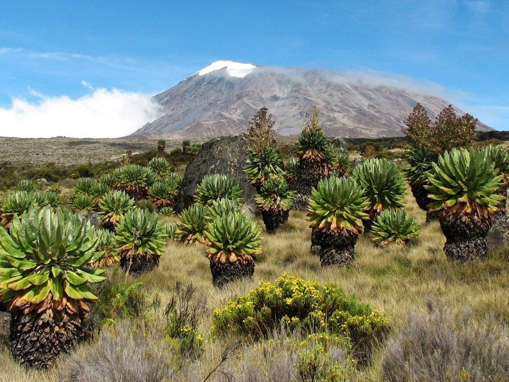 Herrlicher Blick auf den Kilimandscharo