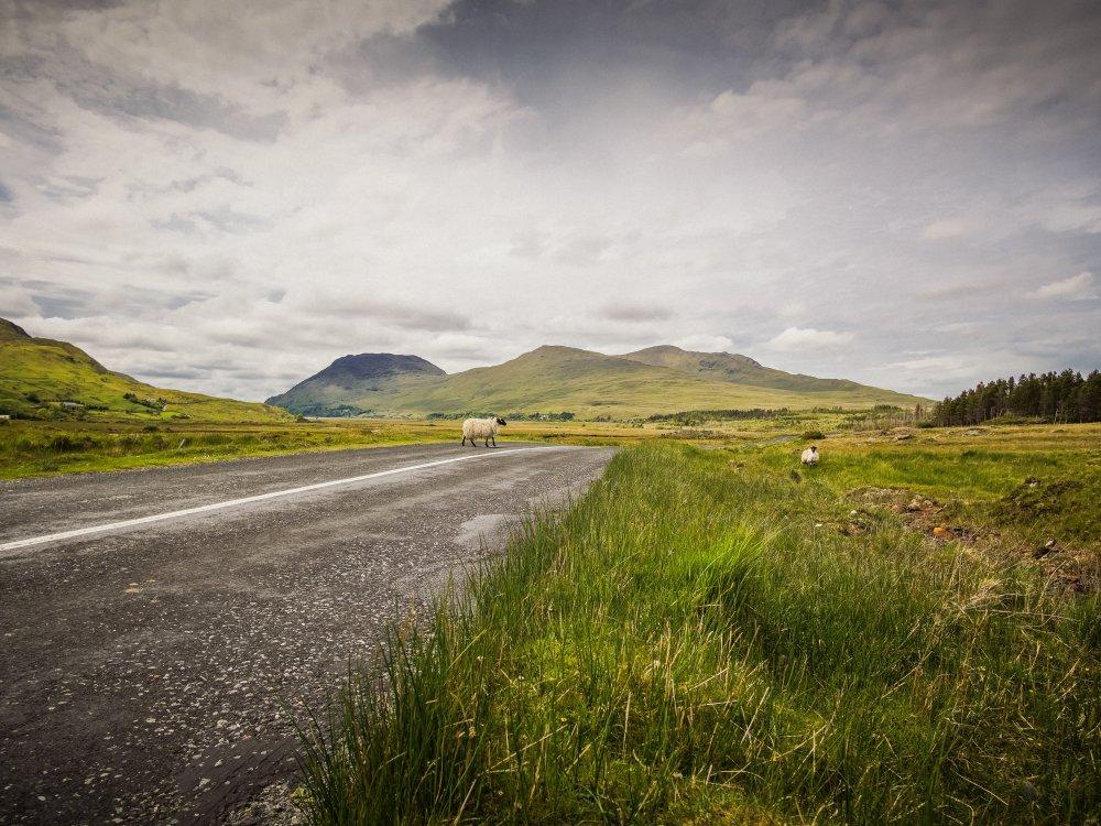 Connemara wilde Landschaft mit Schafen