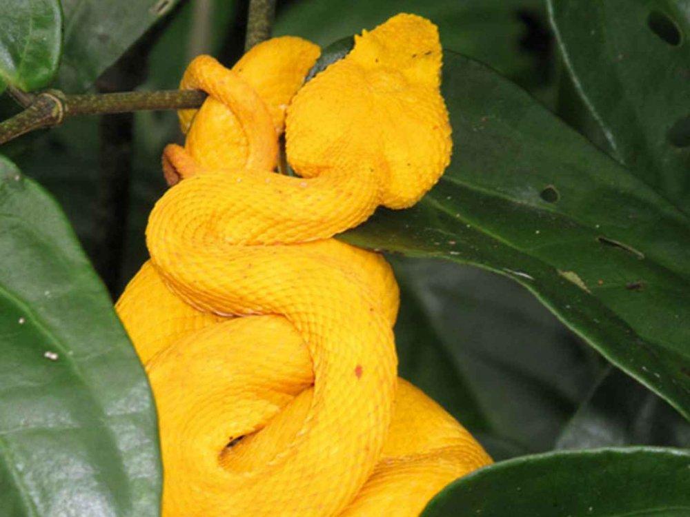 198Y30003 Wanderreise auf den Naturpfaden Costa Ricas Karte