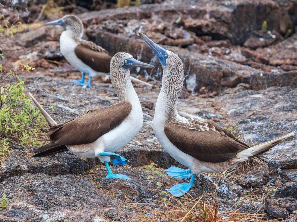 Ecuador & Galapagos Island Hopper