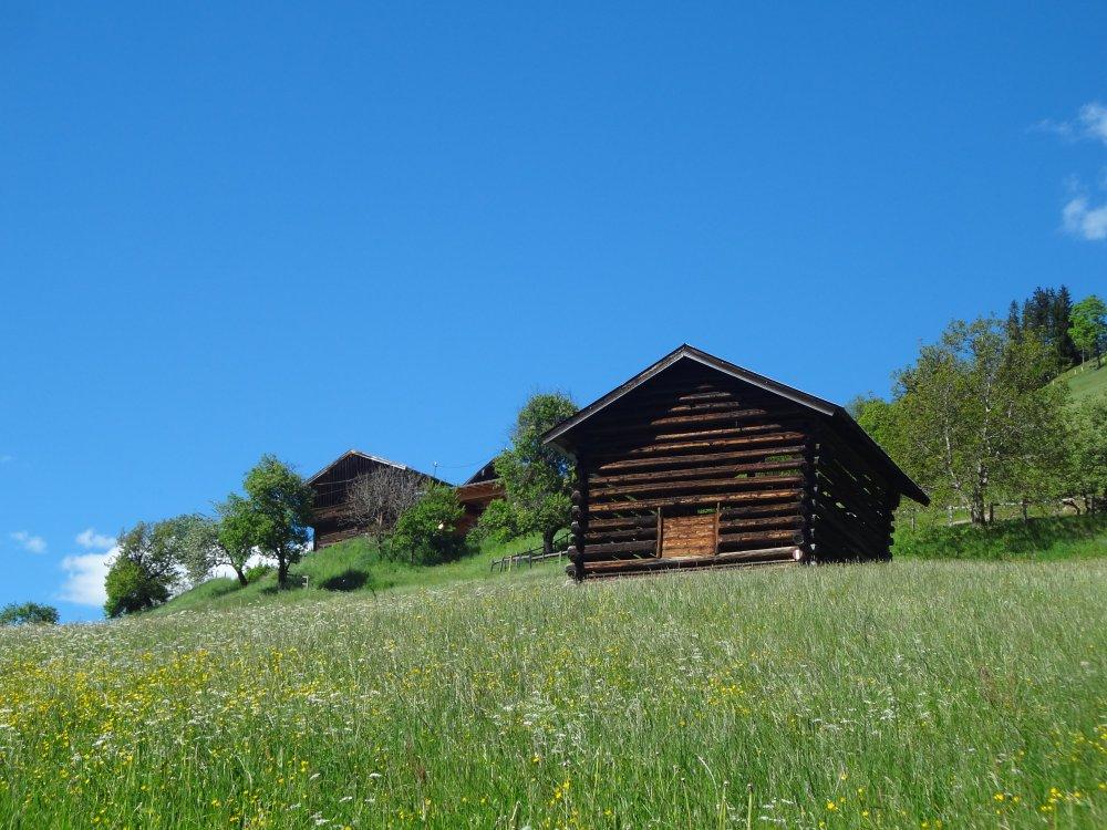 Almwiese im Pinzgau