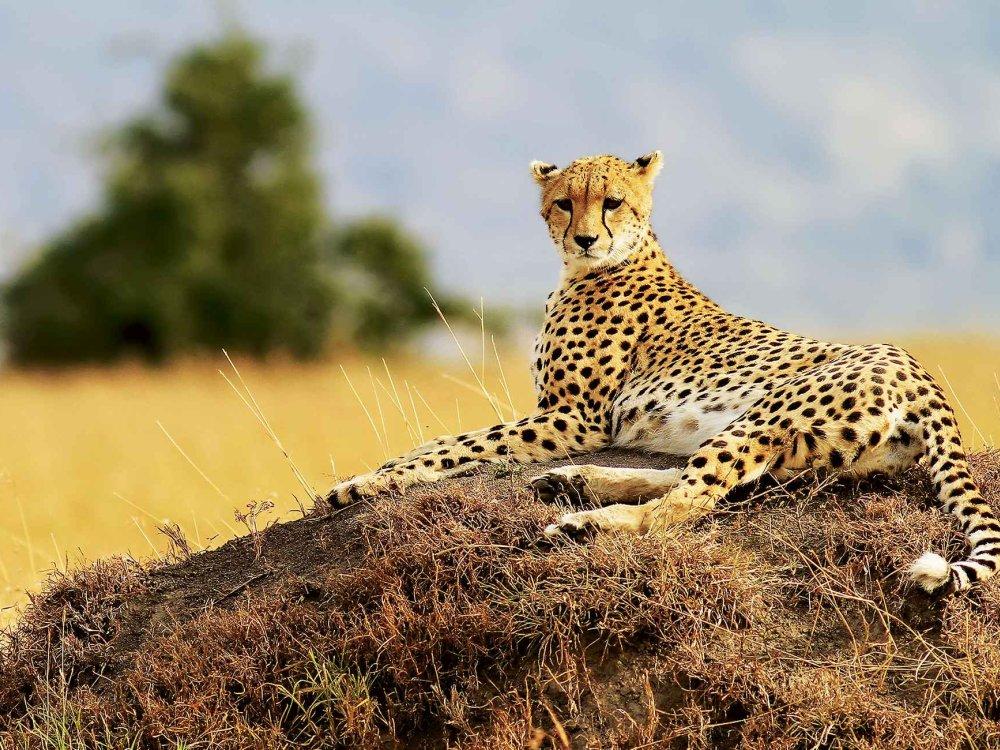Tierparadiese Naivasha & Masai Mara