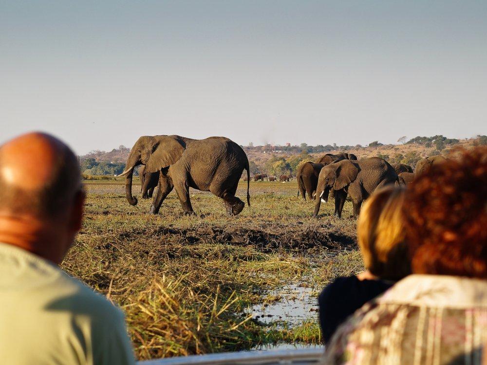 Beobachten von Elefanten bei einer Bootstour im Chobe Park Botswana