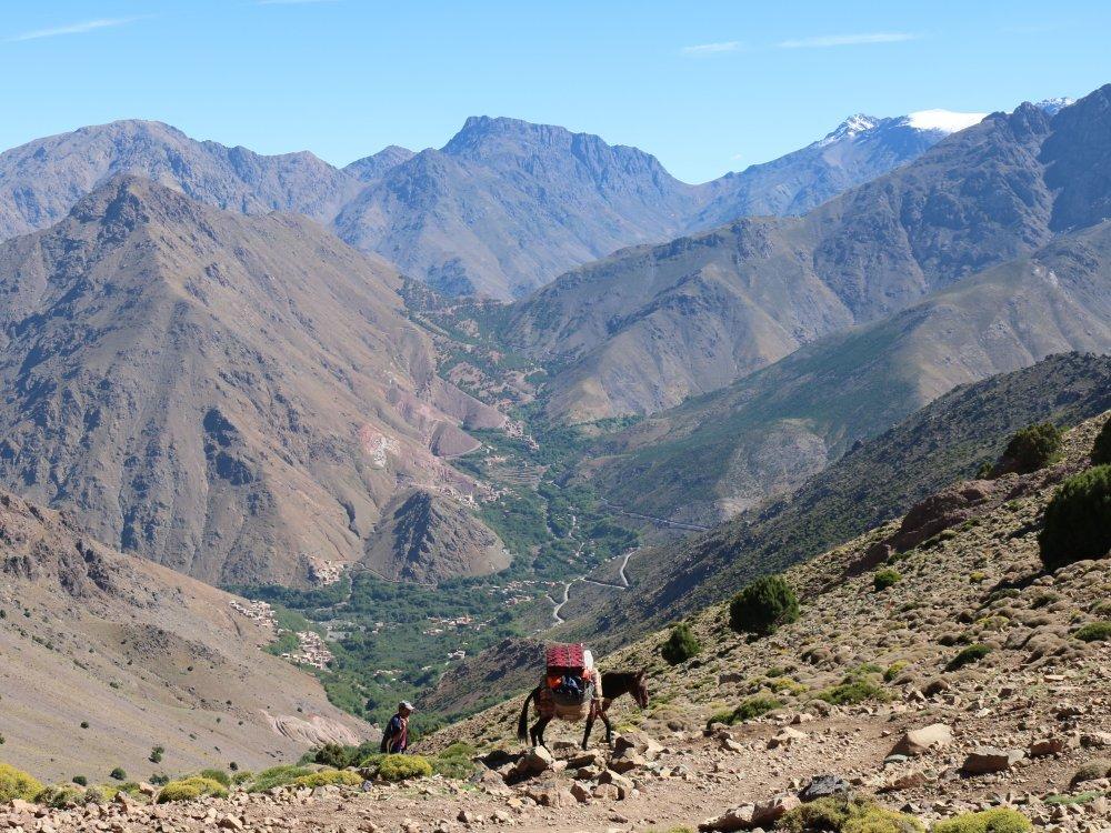 Maultiere transportieren Gepäck beim Trekking am Toubkal