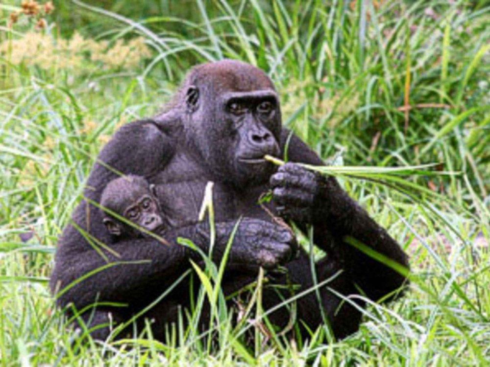 167T31003 In den Regenwald zu Pygmäen, Gorillas und Elefanten Karte