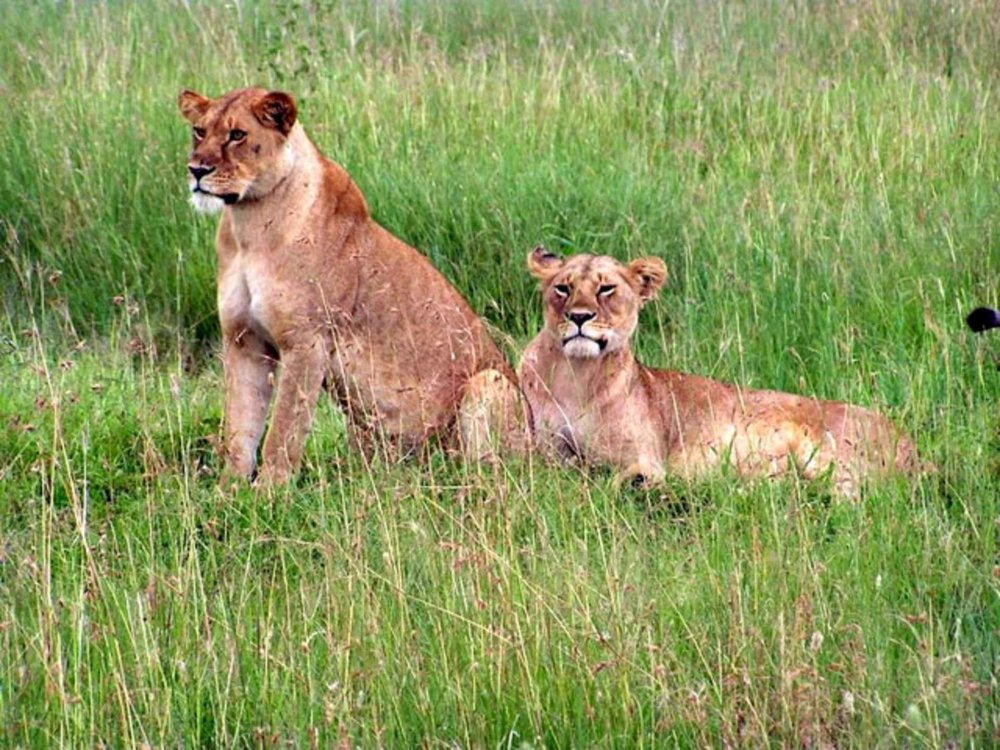 140Y11014 Nationalpark Safari Nord-Tansania & Masai Mara Karte