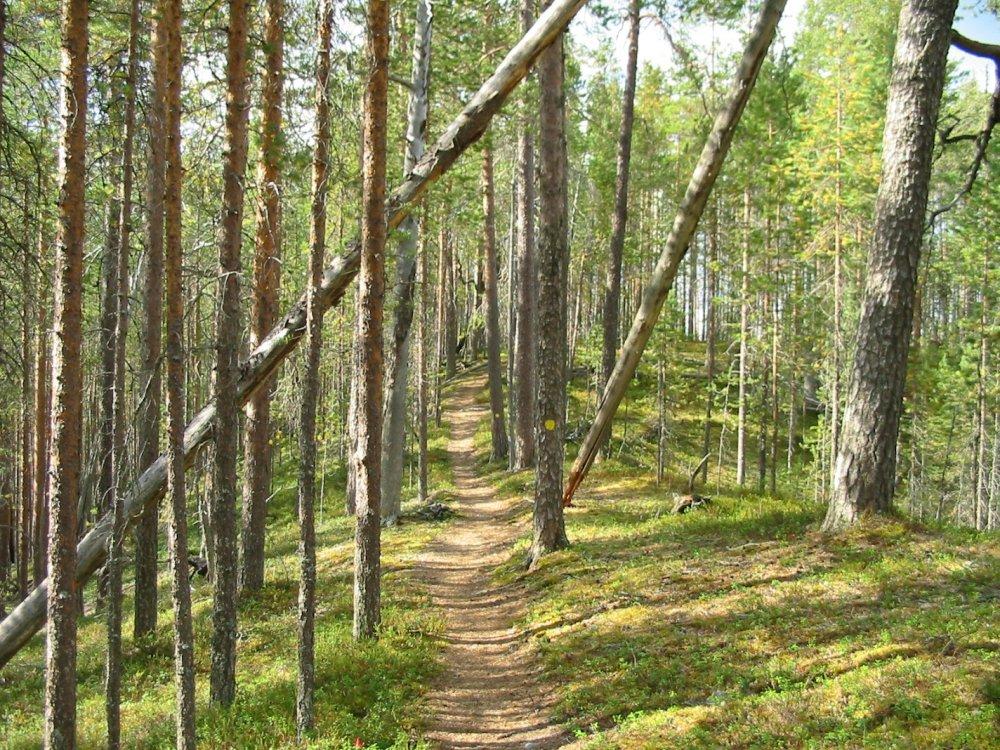 Wanderpfad Finnland an der russischen Grenze