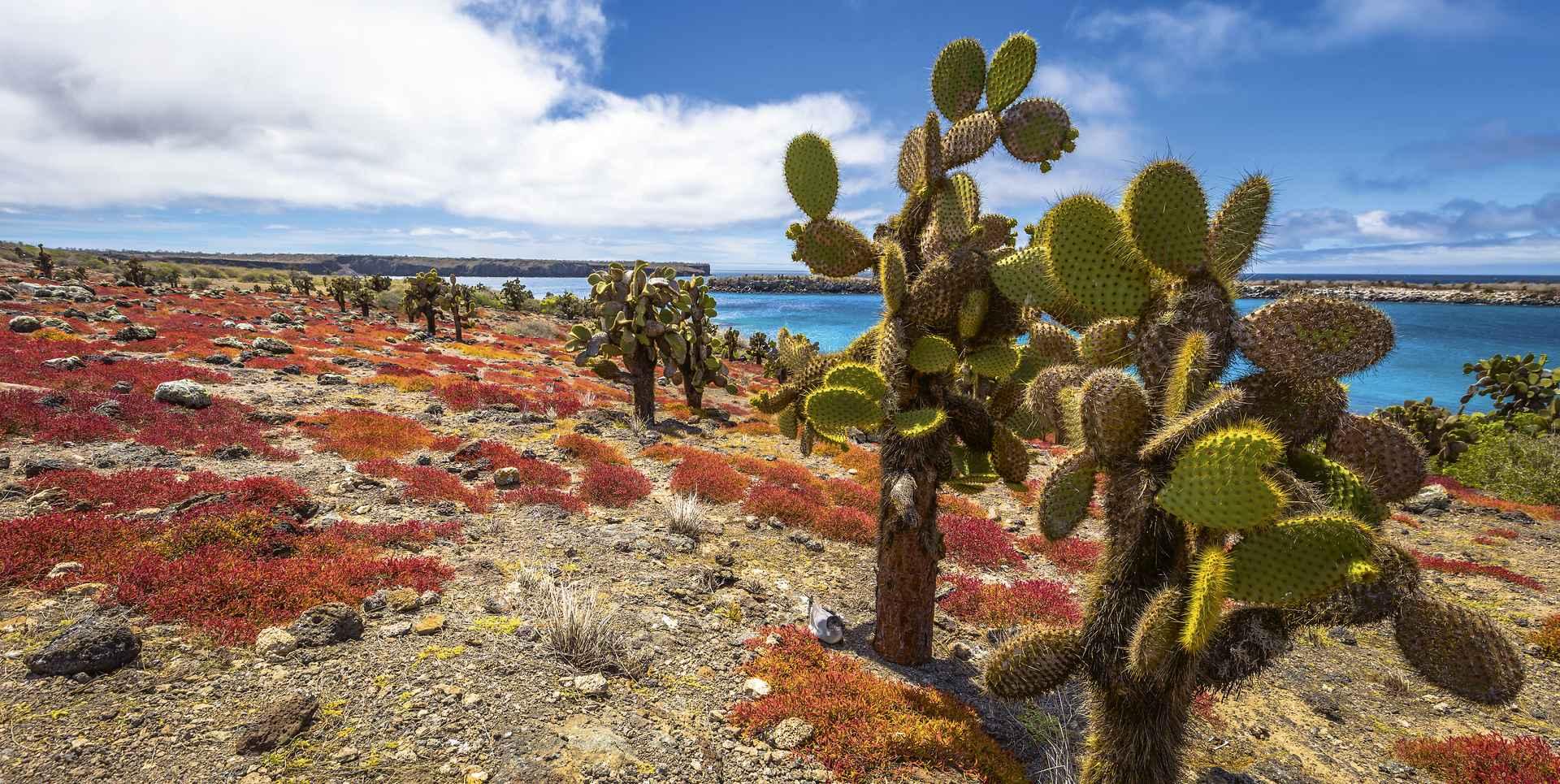 Landschaft auf den Galapagos Inseln