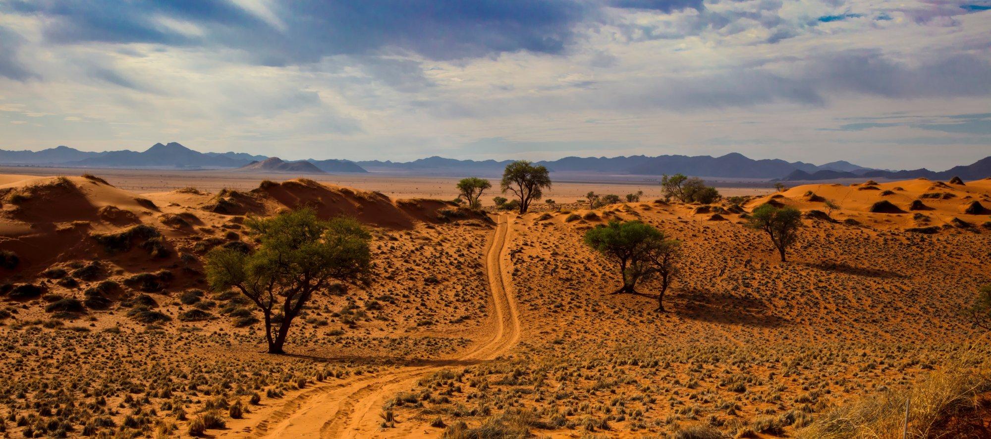 Unbefestigte Piste durch die Wüstenlandschaft