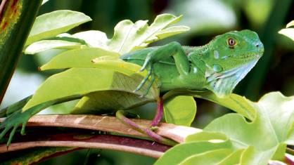 Wildlife Pur - Entdeckungen im Tropenparadies