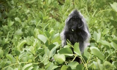 103Y22020_Sarawak-Flora-und-Fauna