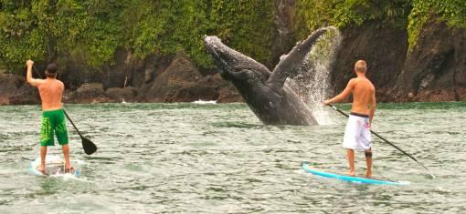 Nuqui - Wale, Dschungel & Strand