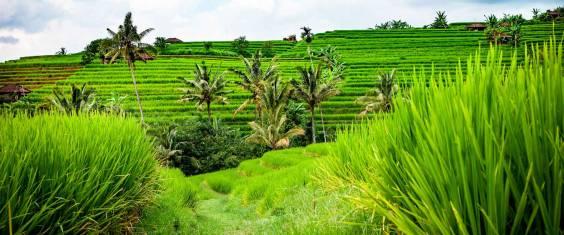Bali & Lombok Naturerlebnis