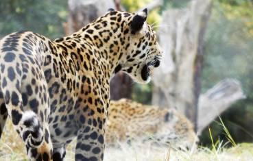 Südafrika Komfortreise vom Krügerpark ans Kap