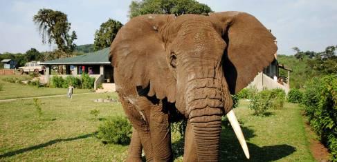 Tansania Safari Höhepunkte