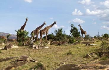 Selous & Ruaha - Ungezähmtes Afrika