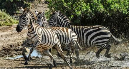 Camping Safari Tansania Serengeti Ngorongoro Tarangire