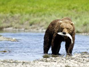 Naturwunder Alaska