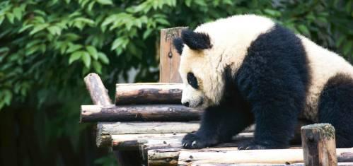 Dragon Trip China – Rucksacktour von Hongkong nach Peking
