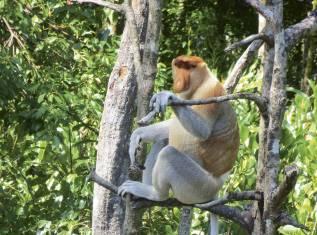 Bako Nationalpark intensiv