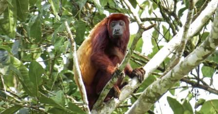 Regenwald Abenteuer Ecuador