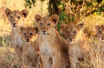 Road to Serengeti
