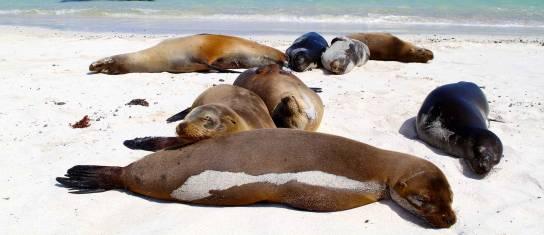 Galapagos Camping Adventure