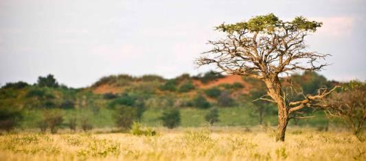 Mietwagenreise Namibia aktiv erleben