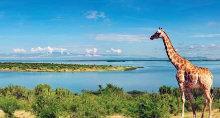 Naturwunder Uganda und Ruanda